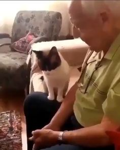 No, pat pat you, grandpa Funny Animal Videos, Cute Funny Animals, Cute Baby Animals, Funny Cute, Animals And Pets, Funny Videos, I Love Cats, Crazy Cats, Cat Facts
