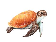 Red Green sea turtle painting, 12 X 9 in, sea animal art, animal lover wall art Watercolor Sea, Watercolor Animals, Watercolor Paintings, Sea Turtle Painting, Sea Turtle Art, Turtle Images, Watercolor Projects, Animal Sketches, Mermaid Art