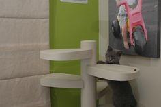 Monkee Tree Cat Climbing Gym