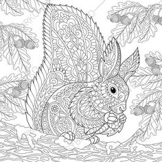 Adult Coloring Pages. Squirrel. Zentangle Doodle Coloring Book