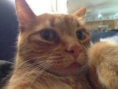 Funny cat Selfie 6 pics