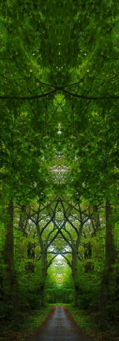 The Enchanted Forest / Modern Fairytale / karen cox.  Holy Moments - Tree Cathedrals