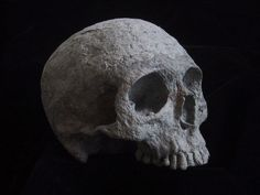 Realistic Human Skull without Jaw - Paper Mache - Halloween Decoration or Dia de los Muertos - Real Time - Diet, Exercise, Fitness, Finance You for Healthy articles ideas