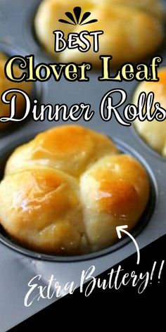 Dinner Rolls Easy, No Yeast Dinner Rolls, Homemade Dinner Rolls, Dinner Rolls Recipe, Homemade Dinners, Easy Yeast Rolls, Homemade Yeast Rolls, Bread Rolls, Clover Leaf Rolls