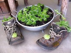 Shoes, Colanders, & Hens & Chicks