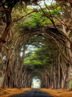 Point Reyes National Seashore, California ~