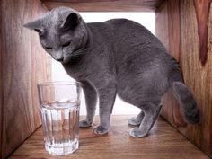 Faszination Wasser: Diese Katze entdeckt sie gerade für sich — Bild: Shutterstock / Nailia Schwarz www.einfachtierisch.de