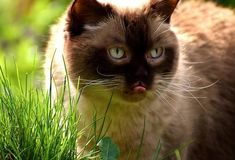Raw or not can cats eat honey? And it is safe?