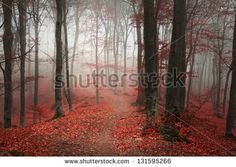 Beautiful autumn foggy day into the forest