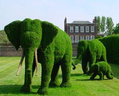 Elephant topiaries #garden #topiary