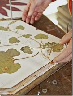 Folhas desidratadas em prensa de madeira e papel + http://br.answers.yahoo.com/question/index?qid=20060925071714AAvNOrK