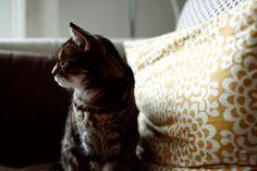 The comtemplative cat.