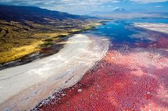 Lake Natron - Tanzania. Calcified animals have been found on the shore of this lake. Over time, if an animal has been submerged in the water, it essentially turns to stone! Creepy.