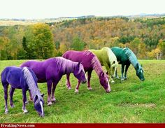 """Did you know that for the """"horse of a different color"""" in the movie the Wizard of Oz the horses' coat colors were changed color with Jello?  :)))))"""