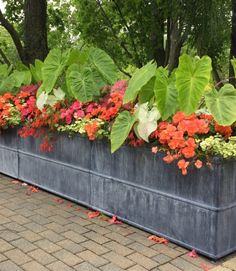Waiting to plant seasonal containers until the soil and night temperatures warm up in our zone is an idea of considerable merit. For those of you that read this journal regularly, you already know … Rock Garden Plants, Fall Plants, Garden Pots, Garden Ideas, Potted Plants, Container Plants, Container Gardening, Plant Containers, Container Flowers