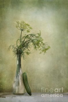 Still life with dill flowers and a cucumber by Priska Wettstein