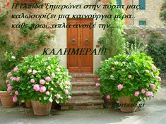 Small Gardens, Good Morning, Greece, Spa, Outdoor Structures, Plants, Drink, Night, Quotes