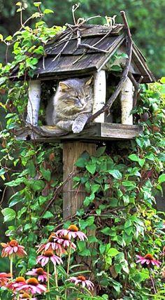 Kitty guarding the bird feeder - My Cottage Garden ❤