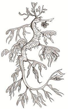 Seadragon Songs Of The Sea Coloring Book