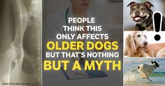 Osteoarthritis, also known as degenerative joint disease, is a primary disease associated with aging, or a secondary disease with a wide range of causes. http://healthypets.mercola.com/sites/healthypets/archive/2017/09/13/dog-osteoarthritis.aspx