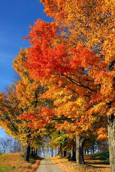 One of my fav things.a crisp Autumn day.blue sky and beautiful fall colors! New England Fall, Autumn Scenes, All Nature, Autumn Nature, Seasons Of The Year, Fall Pictures, Belle Photo, Beautiful Landscapes, Autumn Leaves