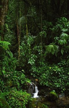Panama. A little bit of everything! Rainforest, beach, canal and culture in one place. by kathie