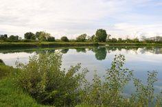 Un'altra bella immagine del lago dei cigni!
