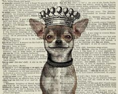 chihuahua print, smiling dog with crown printed on vintage dictionary page, vintage dictionary art print, wall art prints Chihuahua Tattoo, Chihuahua Art, Little Dogs, Smiling Dogs, Dog Art, Dog Life, Puppy Love, Fur Babies, Cute Dogs