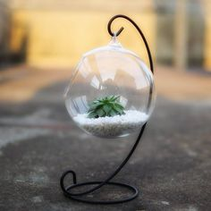 DingaDing Terrariums Hanging Glass Bauble Terrarium With Metal Holder ($31) ❤ liked on Polyvore featuring home, home decor, floral decor, glass terrarium, metal home decor and glass home decor