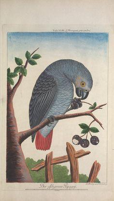 pt.8-9 (1776) - Recueil de divers oiseaux étrangers et peu communs - Biodiversity Heritage Library