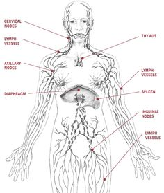 Healing Acne The Herbalist's Way – Draining The Lymph Akne heilen The Herbalist's Way – Die Lymphe entwässern – Holistic Health Herbalist Ayurveda, Lymphatic Drainage Massage, Lymphatic System, Alternative Health, Rebounding, Things That Bounce, Herbalism, Yoga, Healthy Life