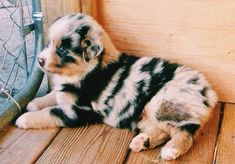 puppy love Source by Cute Dogs And Puppies, I Love Dogs, Doggies, Cute Little Animals, Cute Funny Animals, Beautiful Dogs, Animals Beautiful, Aussie Dogs, Australian Shepherds