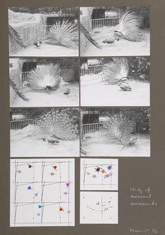 Dora Maurer, Studies of Minimal Movements (peacock), 1972 – Gelatin silver prints, chalk, felt pen, thin paper on cardboard, 70 x 50 cm.Image Courtesy of Dora Maurer.