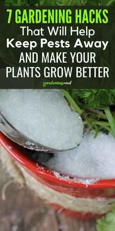 We've comprised a list of our favorite 7 gardening hacks that will not only save you time but transform your backyard into an oasis of greenery! #gardeninghacks #gardenhacks Fruit Garden, Garden Soil, Tropical Garden, Garden Plants, List Of Vegetables, Fruits And Veggies, Epsom Salt Fertilizer, Organic Vitamins, Seed Germination