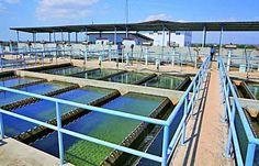 Suspenden producción de agua en la potabilizadora de Pacora - Mastrip.net