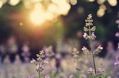 10 Reasons Children, Adults and Communities Need Vitamin N | Children & Nature Network