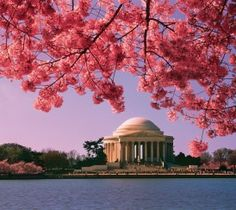 5 Things you Need to Know About the National Cherry Blossom Festival in Washington, DC