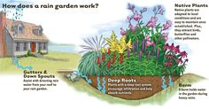 A rain garden is a shallow, constructed depression to catch rainwater. It contains plants that tolerate standing water for several hours. If it is designed properly, all water from a rain event will. Permaculture, Rainwater Harvesting System, Water From Air, Root System, How To Attract Birds, Dry Creek, Water Conservation, Native Plants, Backyard Landscaping
