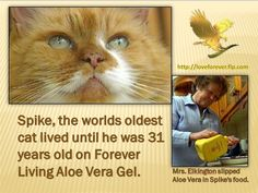 Mrs Elkington attributed Spike's long life to the aloe vera gel she had been putting in the cat food for 10 years.Order at   http://loveforever.flp.com