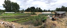 Today the UW Farm is a clean and productive growing site overlooking the Union Bay Natural Area on the University of Washington campus. Photo: Nathan Haan