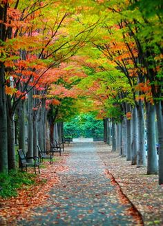 Princeton Allee in Fall ~ autumn, avenue of elms, Princeton, New Jersey