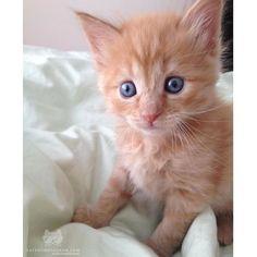 Georgie #kittens