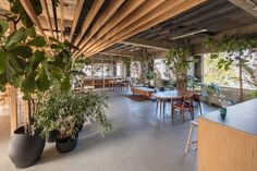 Office with plants that give freshness and greenery