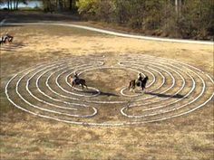 equine labyrinth demonstration - horses on the labyrinth