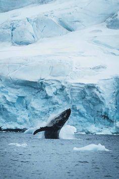 desvre: Antarctica (hannes_becker • INSTAGRAM)