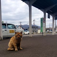 Japan noboribetsu station cat