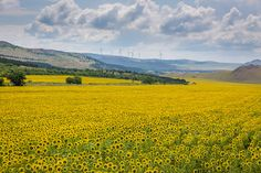 Photo tour in Dobrogea.  #Romania #Dobrogea #travel #tours #photography
