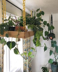 Astounding Useful Tips: Artificial Plants Living Room Ideas artificial plants office planters.Artificial Plants Outdoor Fake Grass artificial flowers decorating with.How To Arrange Artificial Flowers. House Plants Decor, Office Plants, Plant Shelves, Foliage Plants, Plant Wall, Plant Box, Hanging Planters, Diy Hanging, Hanging Gardens