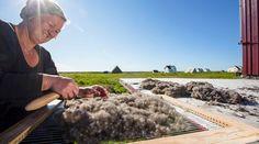 På Lånan blir den gamle tradisjonen med ærfugldrift holdt i hevd. Vi produserer håndlagde edderdunsdyner, og tilbyr naturopplevelser på øya Lånan, ærfuglens rike!