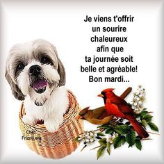 Bon Mardi Humour, Happy Friendship Day, Animals, Facebook, Twitter, Good Morning Happy Saturday, Thinking About You, Good Night, Happy Friends Day
